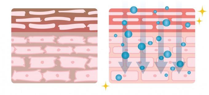 肌の断面図(水分の浸透)